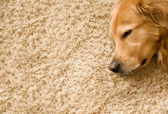 Carpet Flooring Material